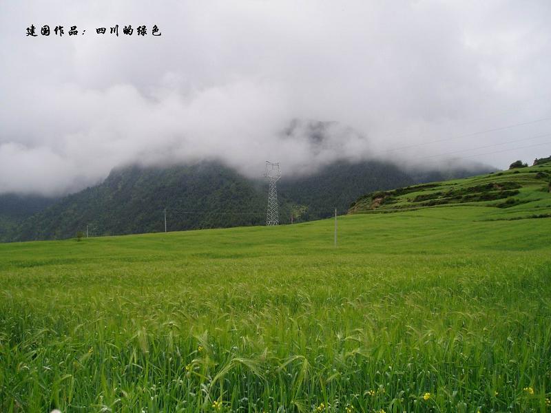 照片:四川的绿色