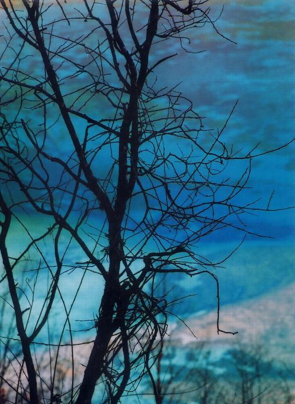 照片:九寨之冬-树