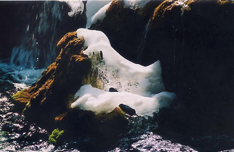 照片:九寨之冬
