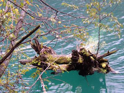 照片:水中真木?