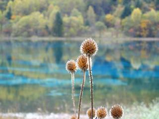 照片:孔雀海边不知名的植物