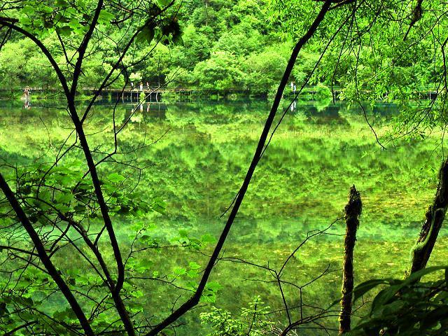照片:绿色镜海