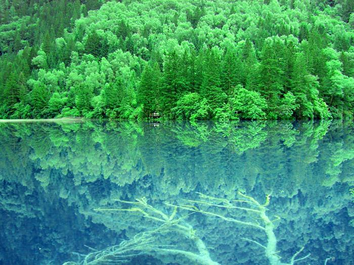 照片:九寨-树