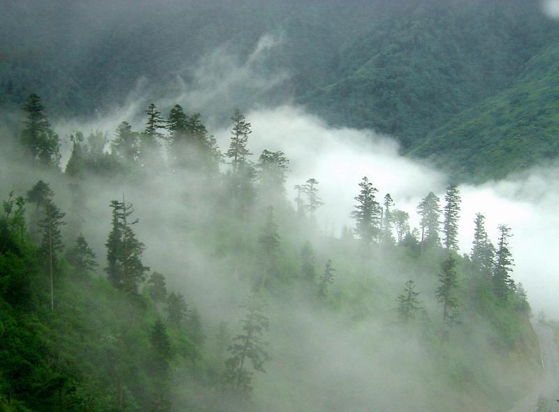 照片:九寨-云中树