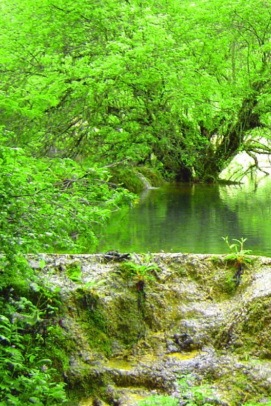 照片:黄龙-树2
