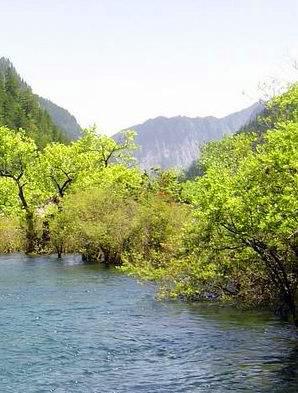 照片:九寨-树正群海2