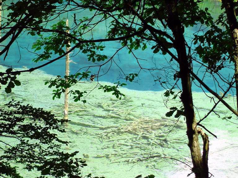 照片:九寨-湖底树珊瑚