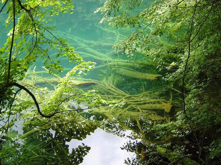 照片:九寨-树珊瑚