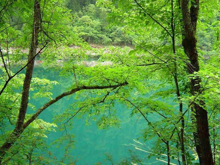 照片:九寨-树丛