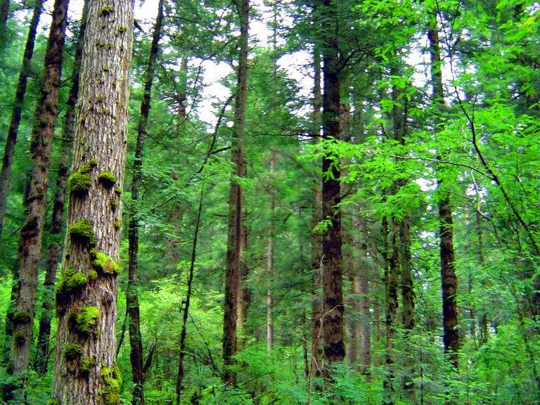 照片:九寨-原始森林