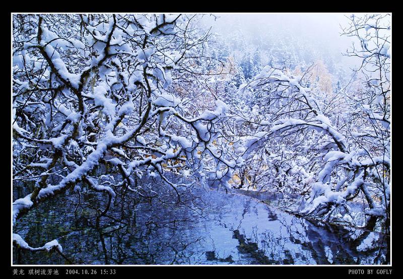 照片:黄龙琪树流芳池