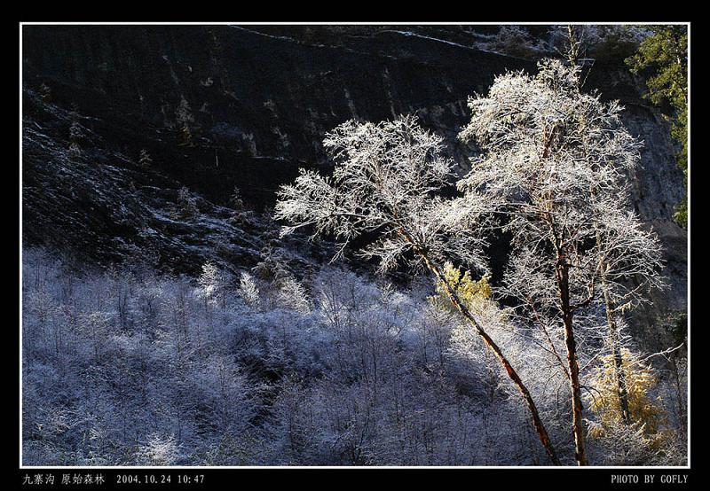 照片:九寨沟原始森林