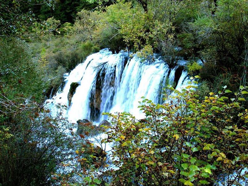 照片:九寨沟的水-树正瀑布