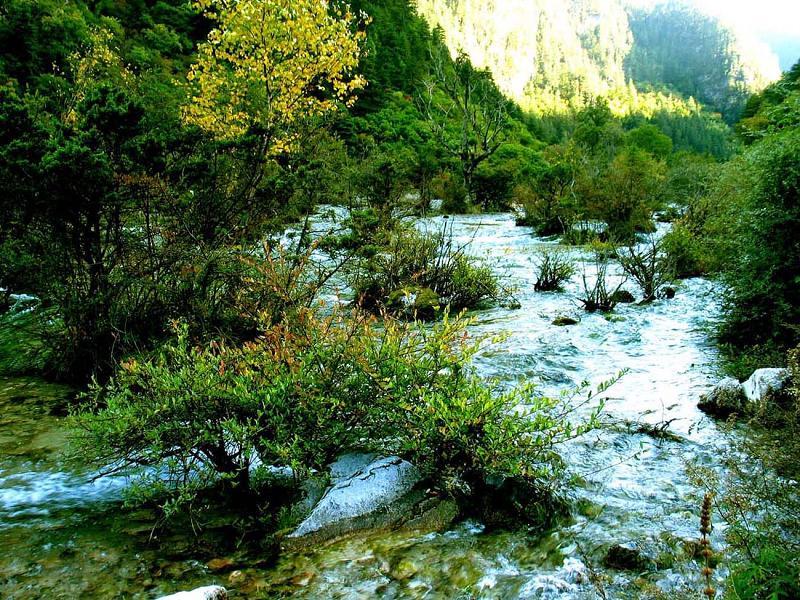 照片:九寨沟的水-盆景滩