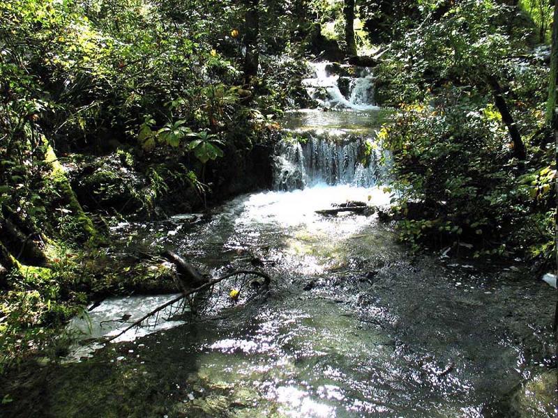 照片:九寨沟的水-熊猫海瀑布4