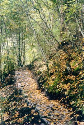 照片:林间径