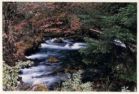 照片:九寨树正沟的路上好美丽