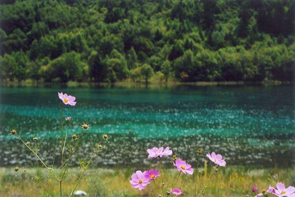 照片:九寨的五花海与九寨的花