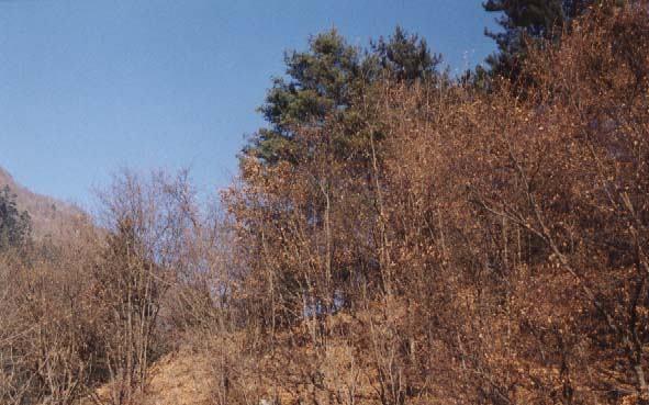 照片:九寨-冬林