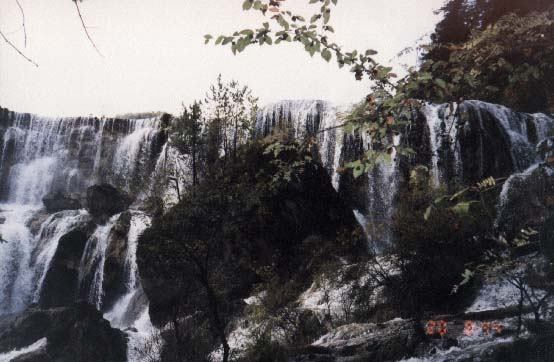 照片:九寨熊猫海瀑布