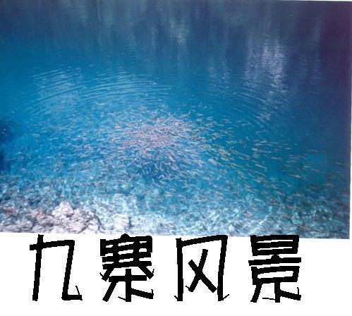 照片:九寨--熊猫海