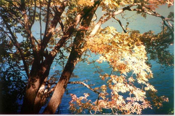 照片:枫叶翩翩