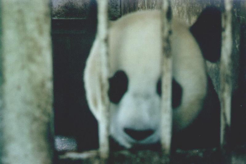 照片:放我出去