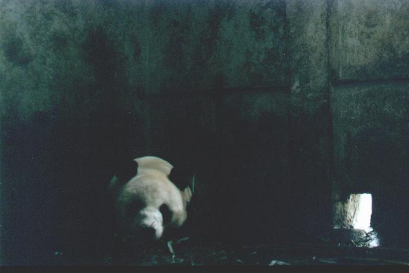 照片:躲在角落里的大熊猫