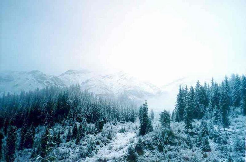 照片:九寨沟的雪之二