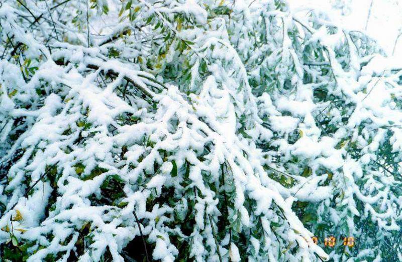 照片:九寨沟的雪之一