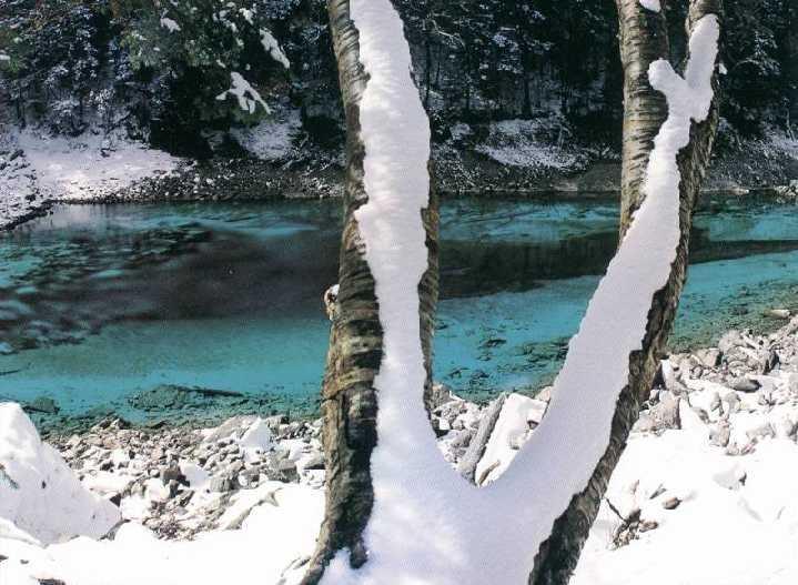 照片:九寨雪景