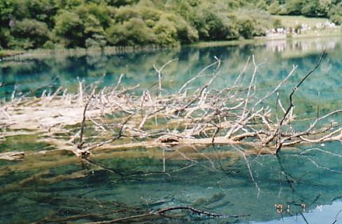 照片:五花海上的树枝