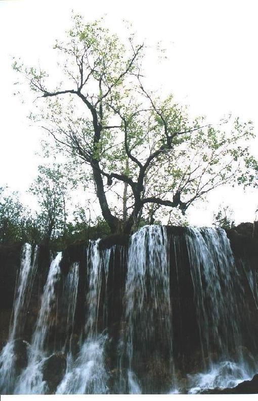 照片:水在树中流