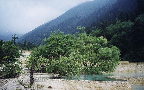 照片:水中树