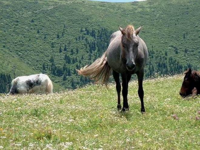照片:在尕尕山上休闲的马儿