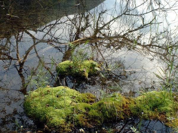 照片:二道海素花湖