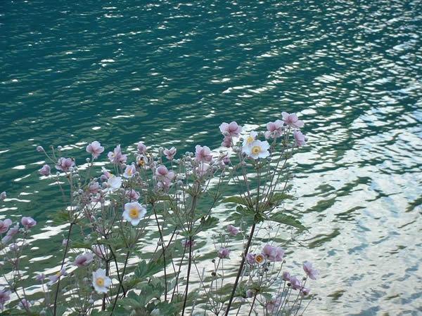 照片:犀牛海边花花