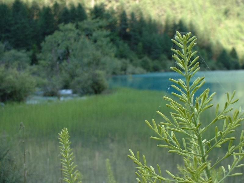 照片:老虎海边野草