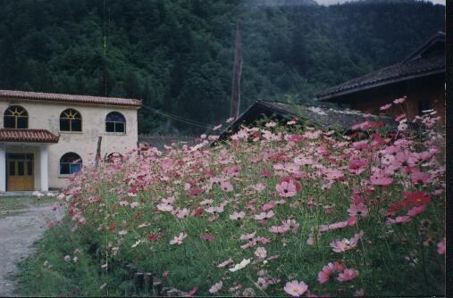 照片:高原之花