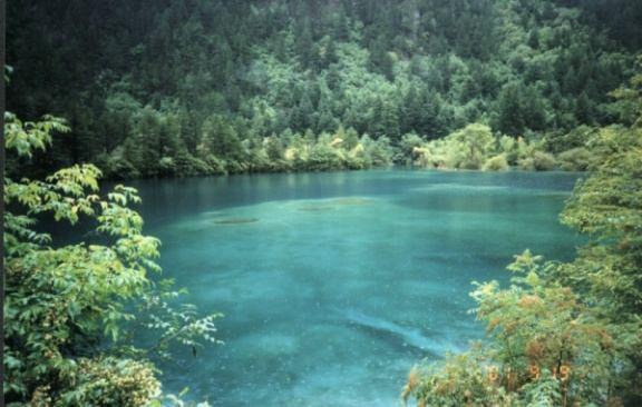 照片:九寨沟树正海