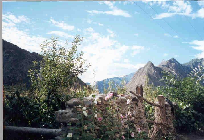 照片:篱笆花墙