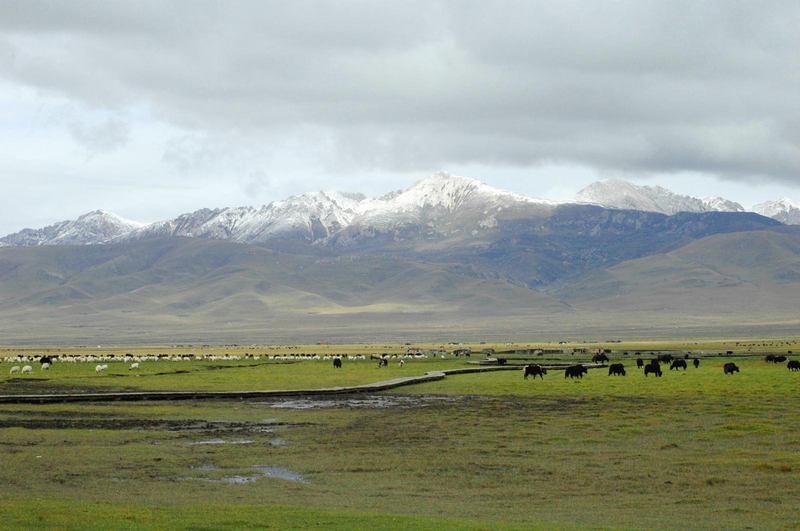 照片:若尔盖草原