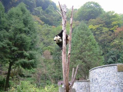 照片:卧龙自然保护区