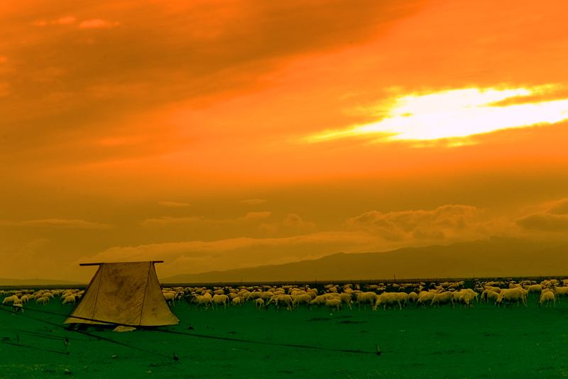 照片:草原黄昏