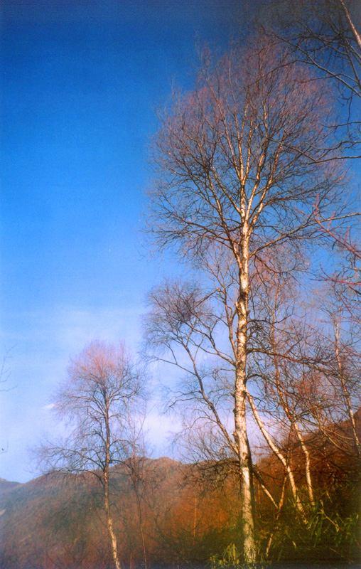照片:来生要做这样的树