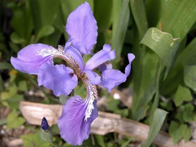 照片:紫色野花