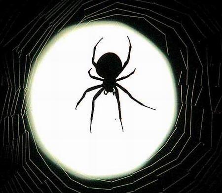 圖文:蜘蛛在滿月下的蛛網上等待食物的到來