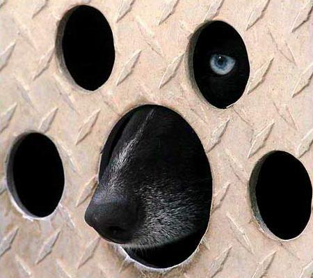 圖文:狗從自己的窩裡向外張望
