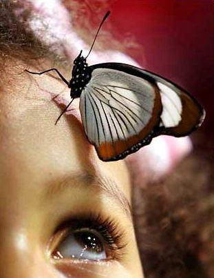 圖文:兒童注視停在自己頭上的蝴蝶