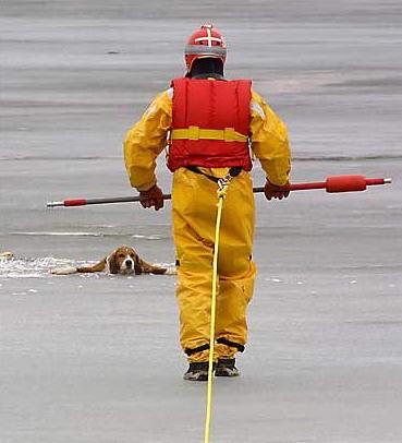 圖文:救援人員準備營救一隻險些掉入冰河的獵犬